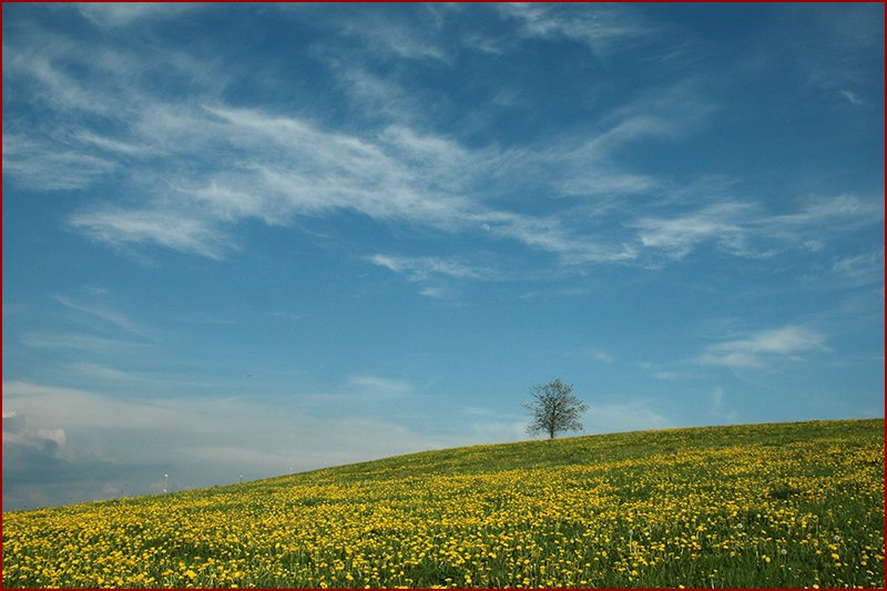 Heerlijk simpel, maar prachtig landschap.